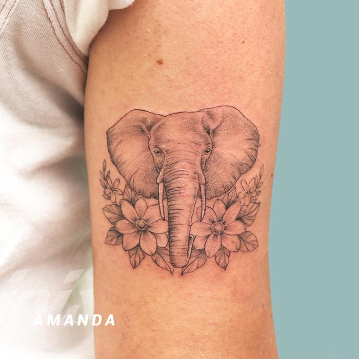 AMANDA elefante